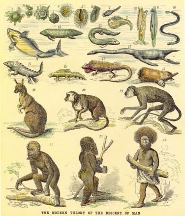 evolution_victorian_illustration.jpg