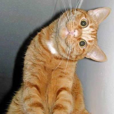 side_look_cat.jpg
